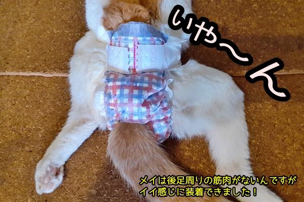 猫用おむつ