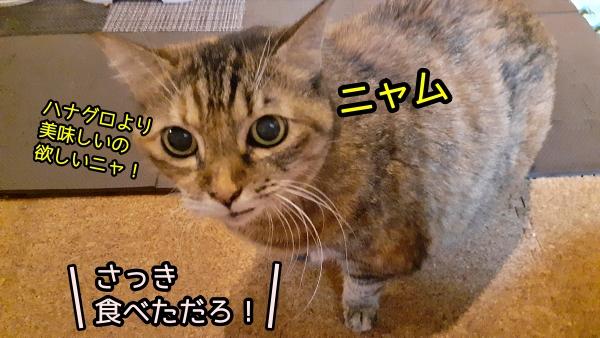 猫 食い気