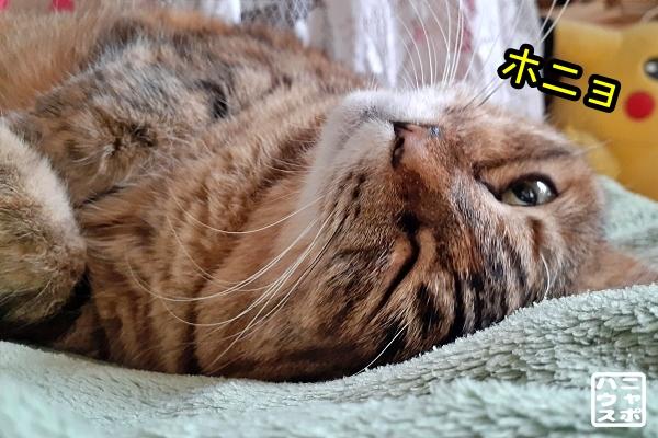 猫 寝起き