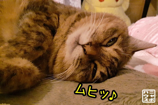 猫 寝る前