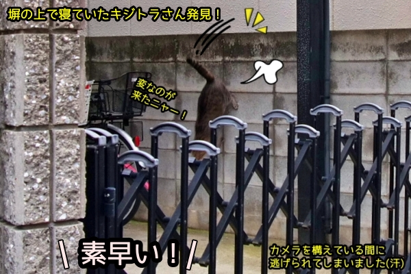 ニャポ旅74 大阪編 その12