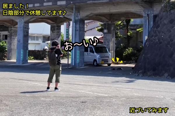 ニャポ旅77 東伊豆弾丸旅行 その3