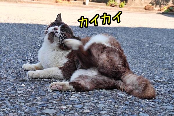 ニャポ旅77 東伊豆 その4