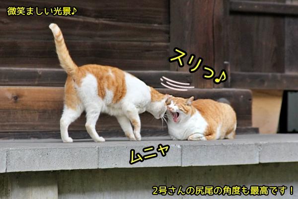 ニャポ旅78 金沢 その2