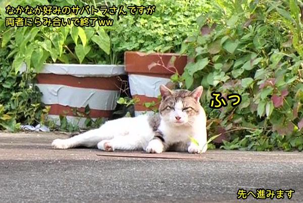 ニャポ旅80 三崎 その1