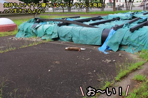 ニャポ旅81 横須賀 その1