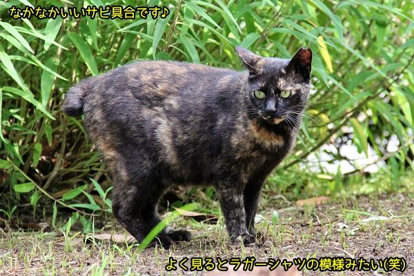ニャポ旅81 横須賀 その2