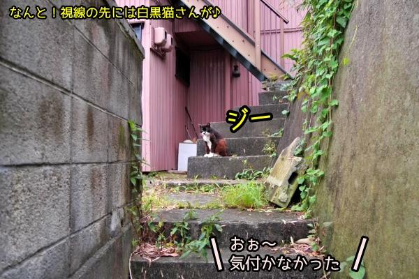 ニャポ旅81 横須賀 その4