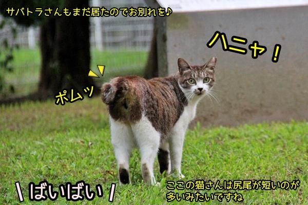 ニャポ旅81 横須賀 その6