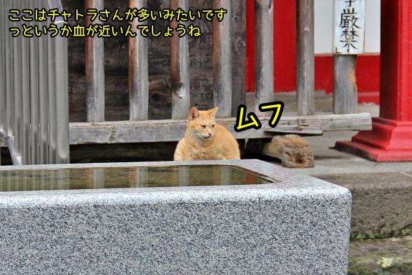 新宿 太宗寺 猫