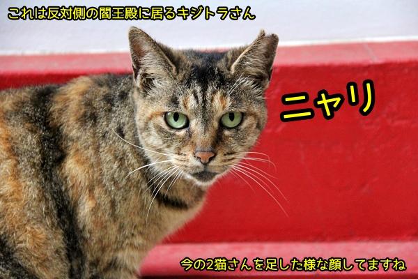 ニャポ旅82 新宿 猫 太宗寺