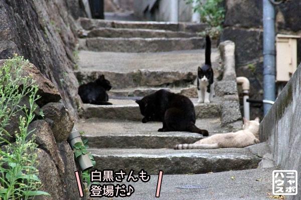 ニャポ旅 猫 尾道 その4
