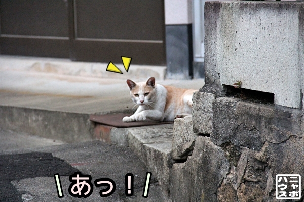 ニャポ旅83 尾道 夕暮れ 猫 その5