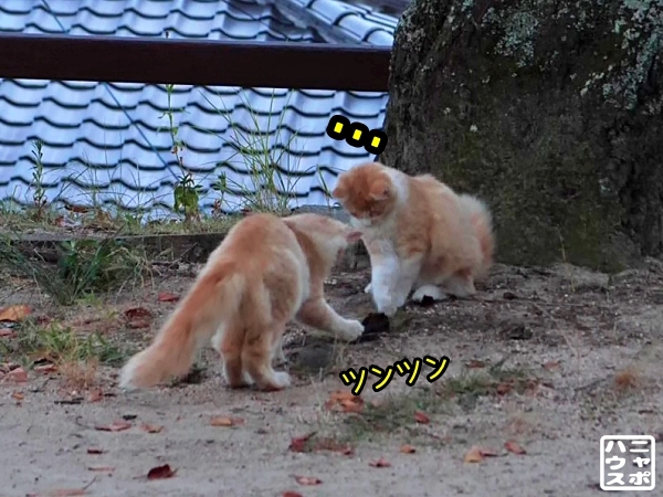 ニャポ旅83 尾道 猫 その6