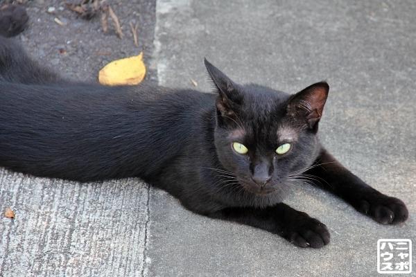 ニャポ旅83 尾道 猫 その9