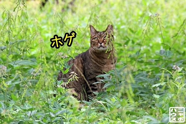 ニャポ旅85 三都猫物語 その2