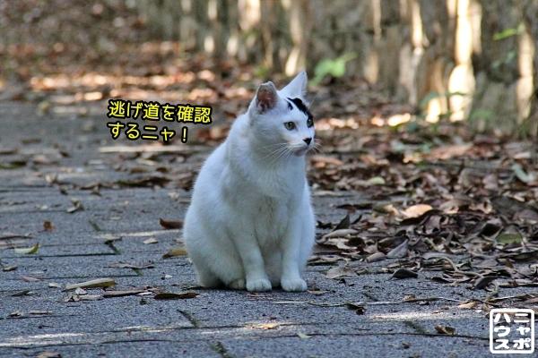 ニャポ旅85 三都猫物語 その4