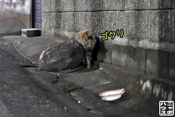ニャポ旅85 三都猫物語 その5