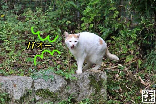 ニャポ旅85 三都猫物語 その9