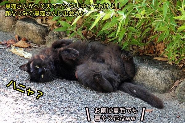 尾道猫旅 速報2