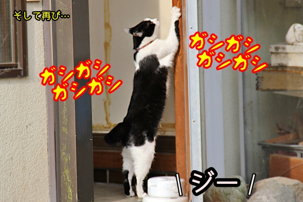 猫 爪とぎ