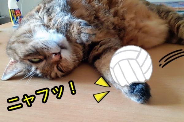 猫 バレーボール