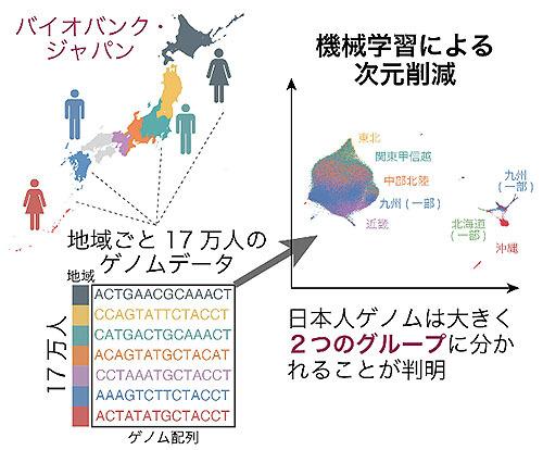 日本人集団の地域によるゲノム多様性を解明