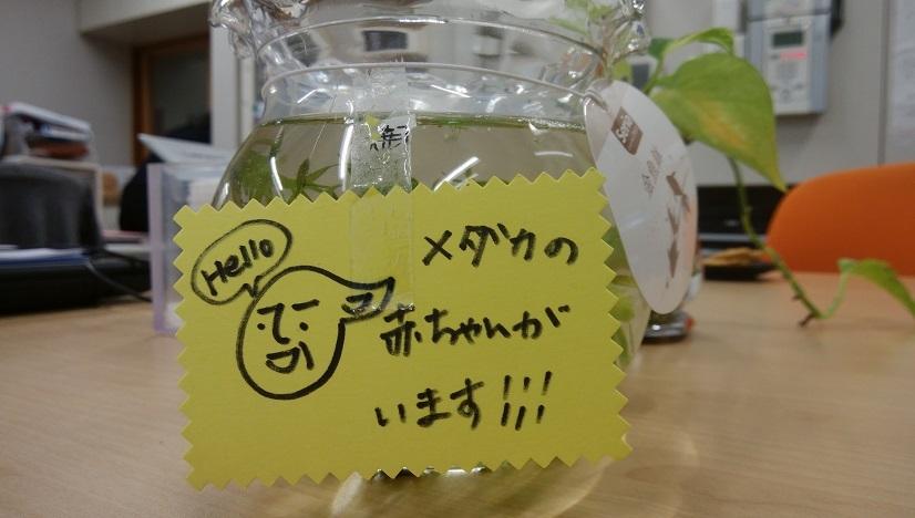 DSC_1089uj.jpg