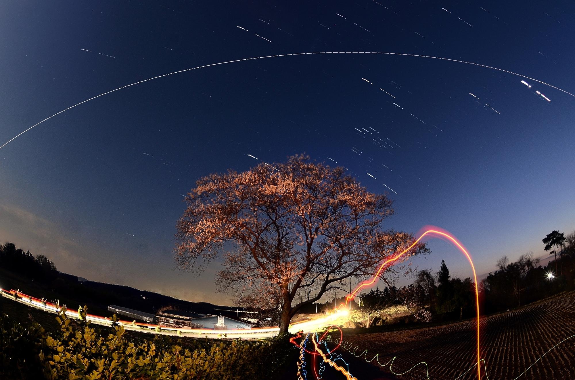 桜完成形-2gs