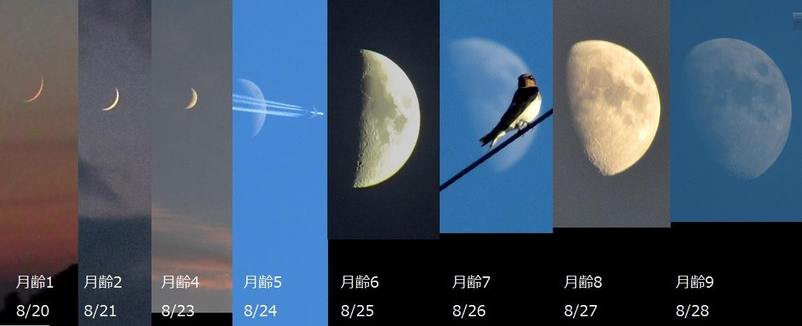 月の変化ロゴ