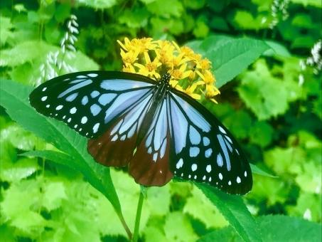 Butterfly475878.jpg