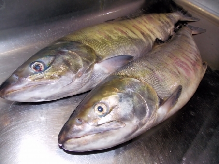 Salmon75878.jpg