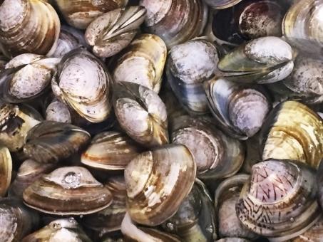 Shellfish78268.jpg