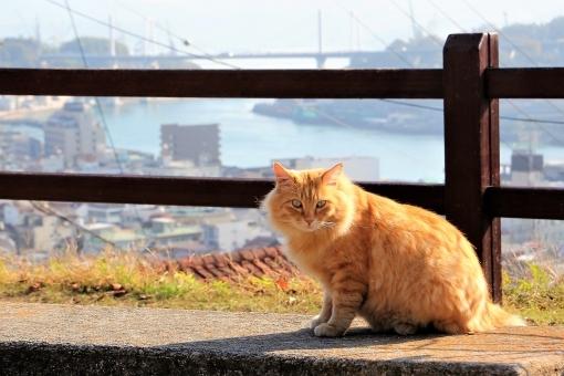 cat876.jpg