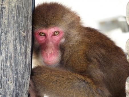 monkey78955.jpg