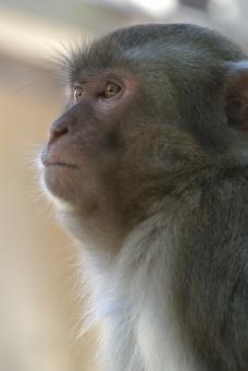 monkey98643.jpg