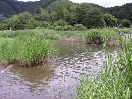 pond_water4856.jpg