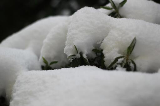 snow6548.jpg