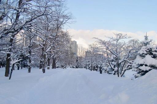snow75456.jpg