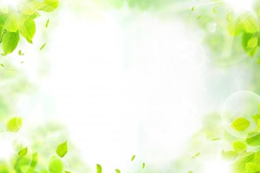 sun9865.jpg