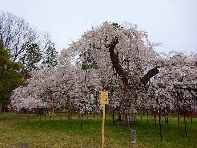 20,3,30 上賀茂神社