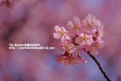 IMG_2021_02_28_9999_55.jpg