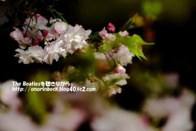 IMG_2021_04_03_7406.jpg