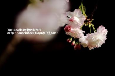 IMG_2021_04_03_7415.jpg