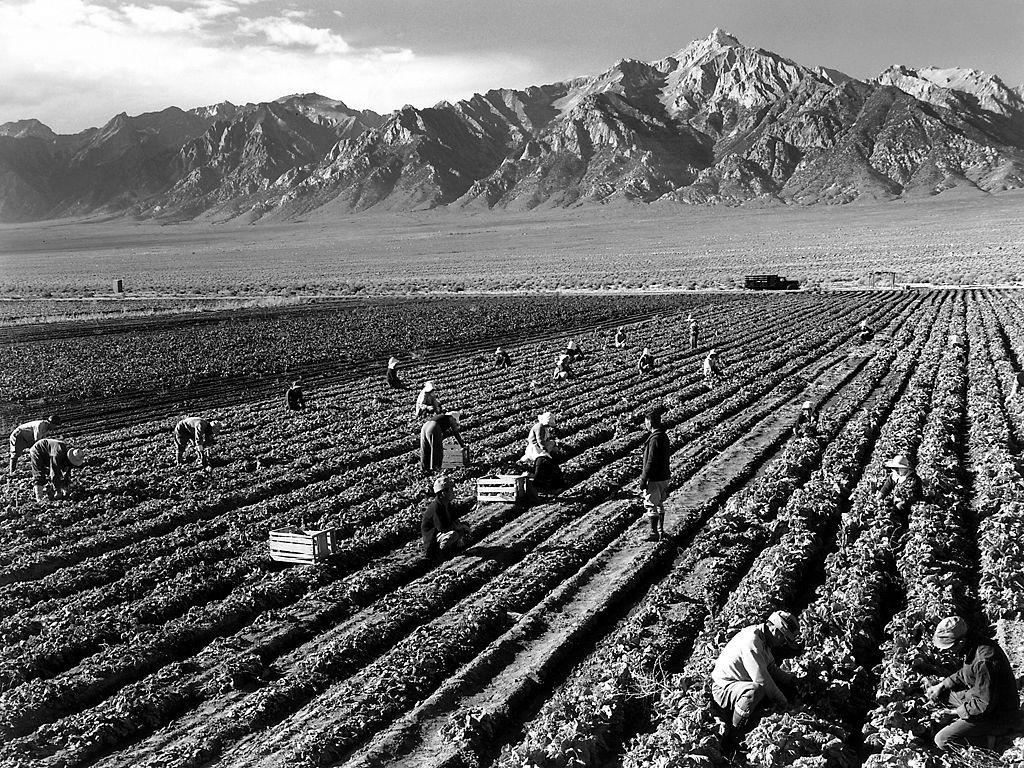 ウィリアムソン山を背景に農作業を行う収容者