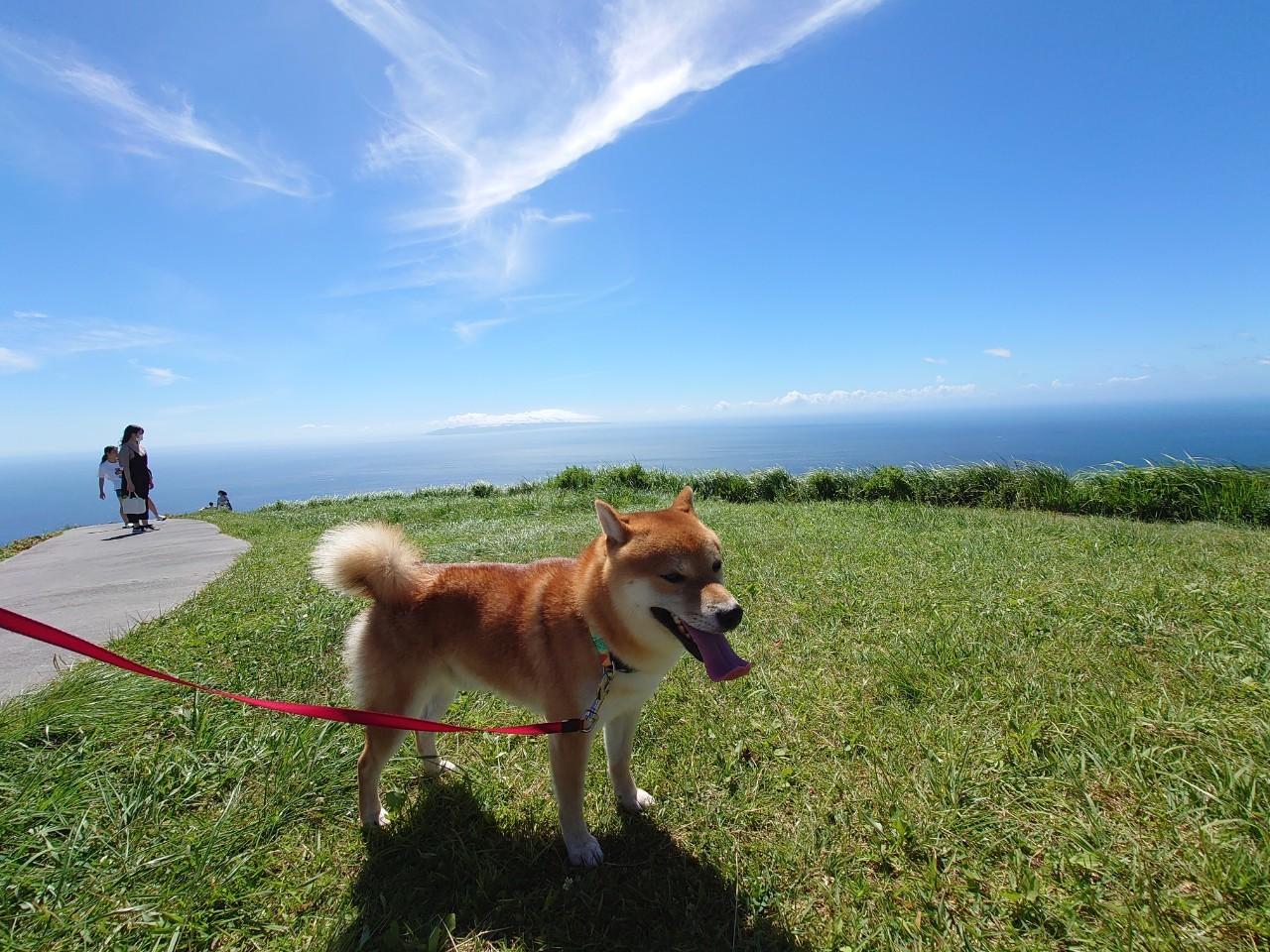 ワンちゃんと行く伊豆半島 ~ リフトで登って楽しむ、絶景ビューの『大室山(おおむろやま)』