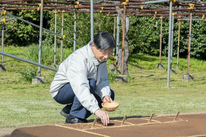 私たちの日本の蒔き直し(まきなおし)は、平成25年(2013年)に始まったばかりなんです!