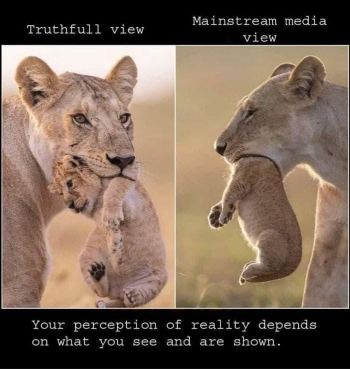 メインストリームメディア(mainstream media)が必死に隠し続けているもの