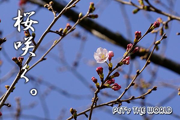 2020-03-21-01.jpg
