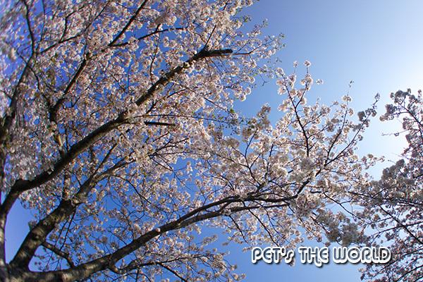 2020-04-04-17b.jpg